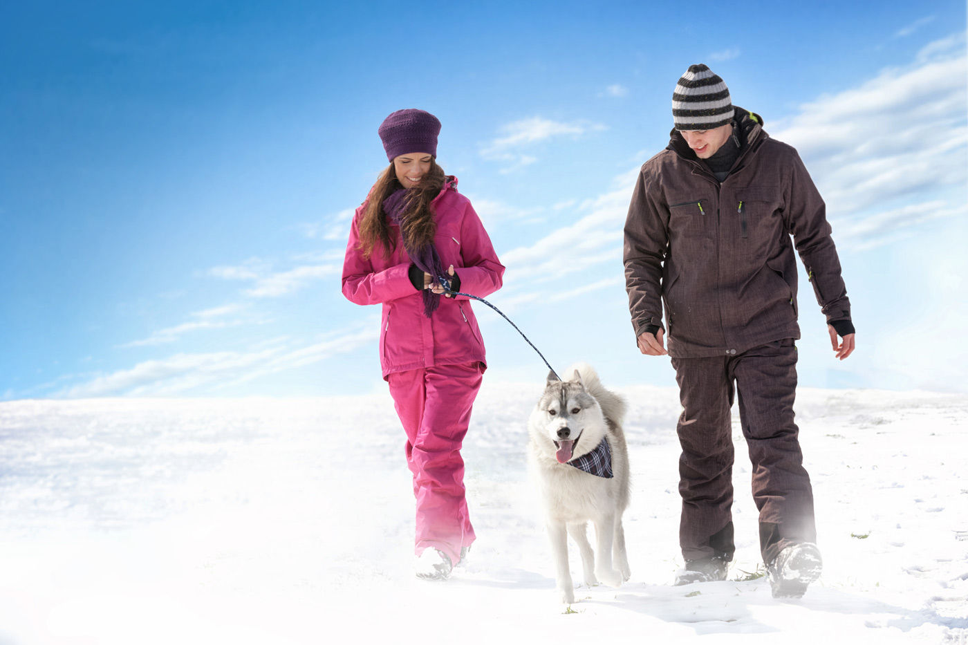 Prepare your dog for walking in winter when visiting Regina, Saskatchewan hotels.